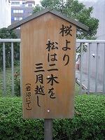 koto-street50.jpg