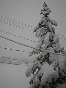 uonuma-street46.jpg