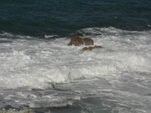 波の花300