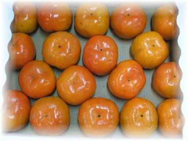 早秋柿-1