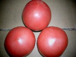 トマト-3個