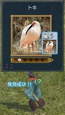 zp01_toki.jpg