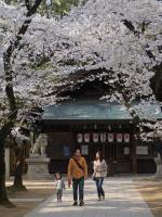 BL120410昼休み桜6R9290588