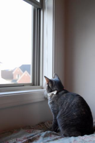 2階の窓にて