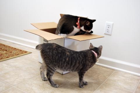 不思議な箱でちゅね~