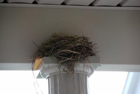 Robinの巣