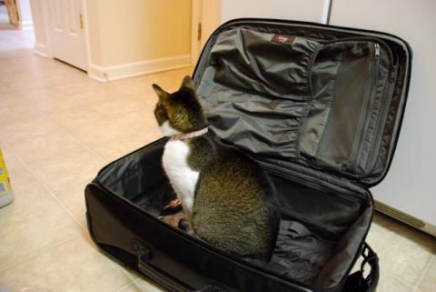 はなちゃんたちのスーツケース
