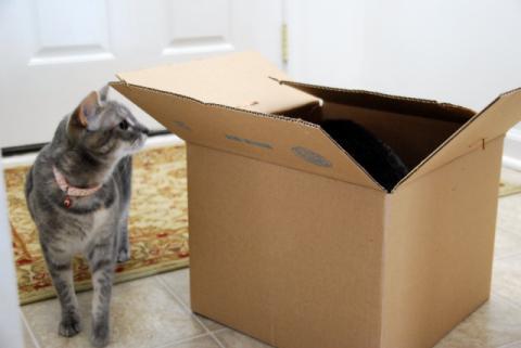 こっちの箱も