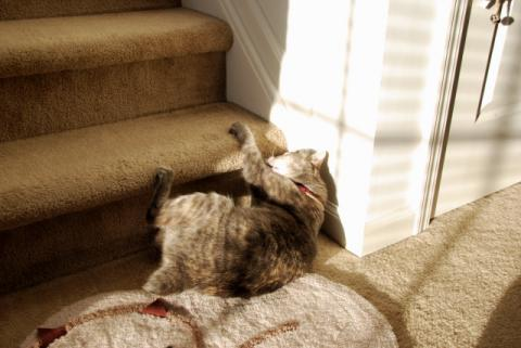 階段のほうが楽しいでちゅ