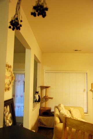 ネコのいる部屋