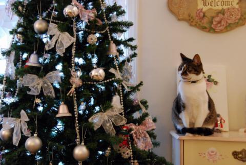 クリスマスだっていうのに