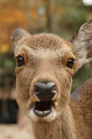 やっぱり鹿!