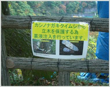 yamabiko-kasinonagakikuimus.jpg