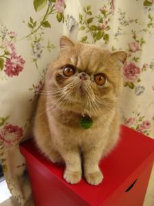マフラー猫