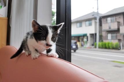 ちょびひげ子猫さん