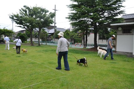 しつけ2011.07お散歩練習