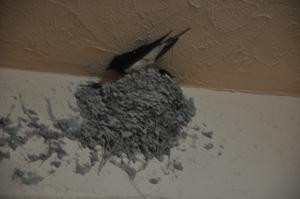 巣に二羽のツバメ
