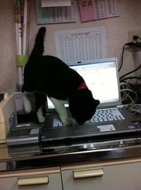 キーボード上の猫