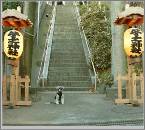 子の神社 のコピー