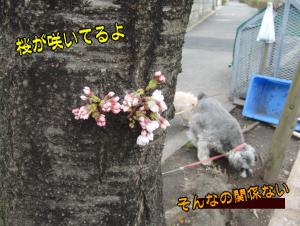 桜 関係ない のコピー