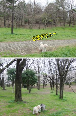 公園デビュー のコピー