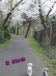 桜 綺麗ね のコピー