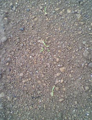 me1_convert_20110720105040.jpg