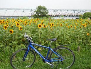 荒川サイクリング7-11-27