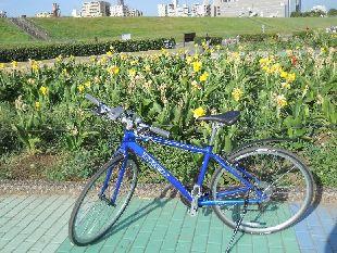 荒川サイクリング04