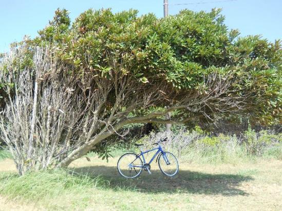 荒川サイクリング06