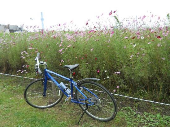 荒川サイクリング10-17-18