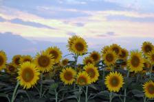 2011_08_18_04_.jpg