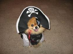 海賊だワン