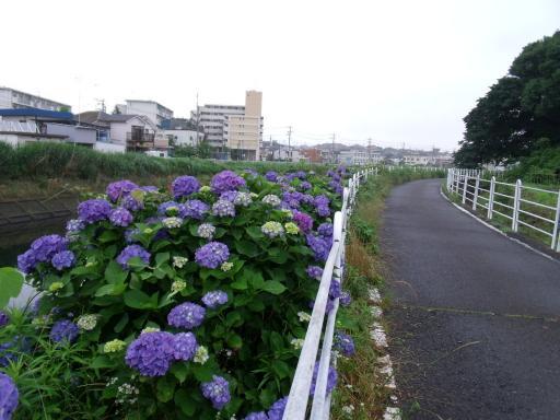 Dscf0411_1.jpg