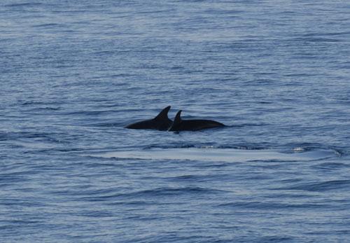 whale-005.jpg