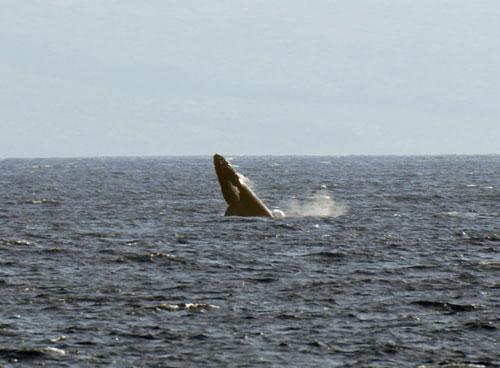 whale-039.jpg