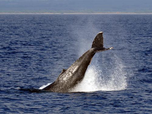 whale-067.jpg