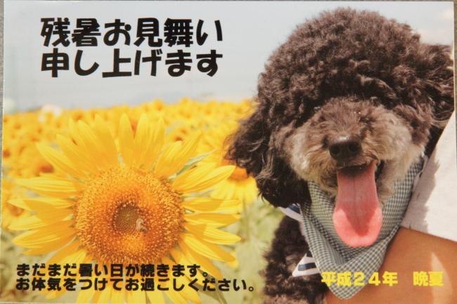 5_20120921120320.jpg