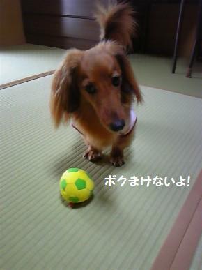 このサッカーボール、かなり古いオモチャの一つ。ついこの間まで忘れられてた存在でもある(汗)