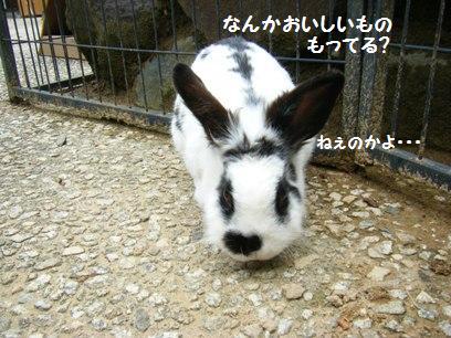 ウサギっておとなしそうだけど、実は性格キツかったりするのよね。