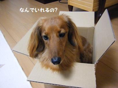 箱に入れる行動、我が家だけではないだろう。