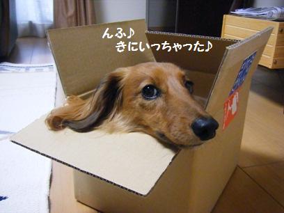 どう見ても小さい箱だったが、ムリに入れてみた(笑)