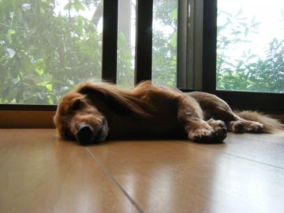暑いときは床寝すると冷たくて気持ちいいが、体痛くなるんだよね。