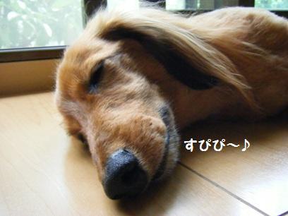 起きてたら「ワンワン」か「遊んでくれ」ばかりだし、寝ててくれた方が、静かでいいか。