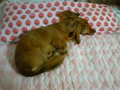 隙あらば、人の枕を占領するヤツ・・・・。