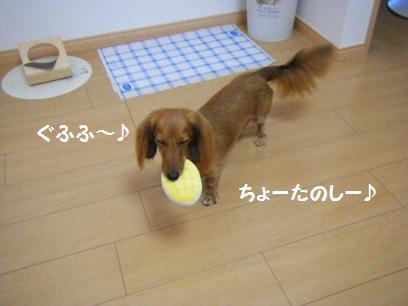 ま、桃はイヌだし可愛いから悪い男でも許しちゃうぞ!  ←アホだ。