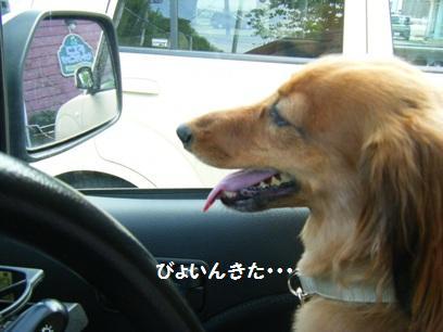 いつも車の中は大騒ぎ!目的地に着いても大騒ぎ!!