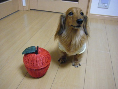 桃は関係ないが、犬ブログの為出演。
