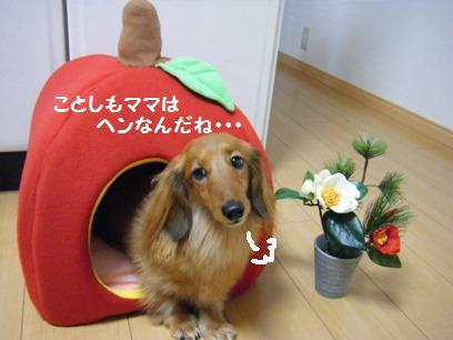 カドラー被って桃に迫ったら、逃げられた。そりゃコワイよね。