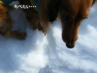 ハダシで雪の上はちべたいよね~~←なら乗せるな